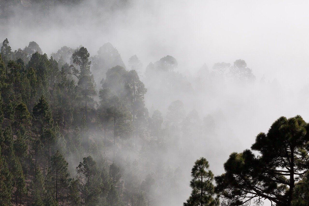 foret ecotourisme